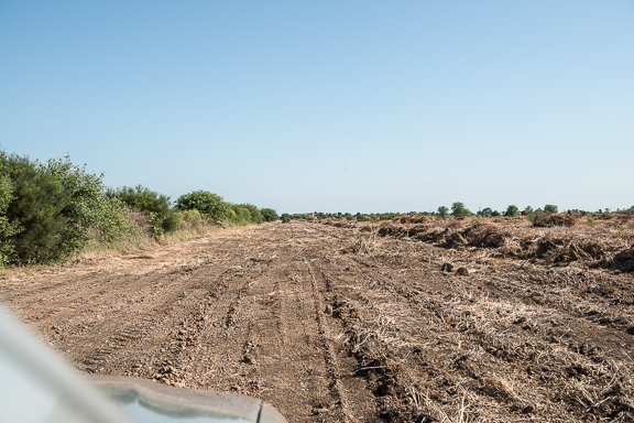 rough cleared road